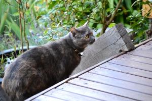 I feel safe outside on my verandah
