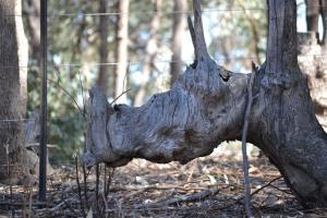 Rhino tree