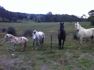 Our lovely neighbours