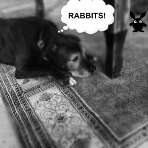 I hate rabbits.....