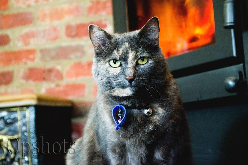 My grumpy old darling Marbles enjoying the fire