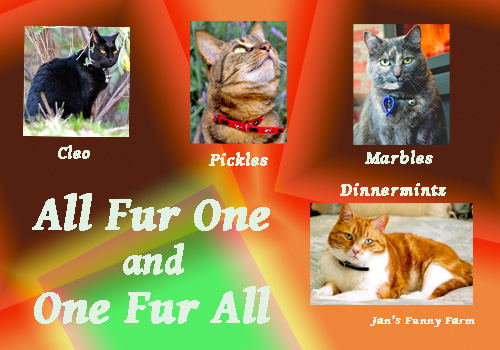 All Fur One