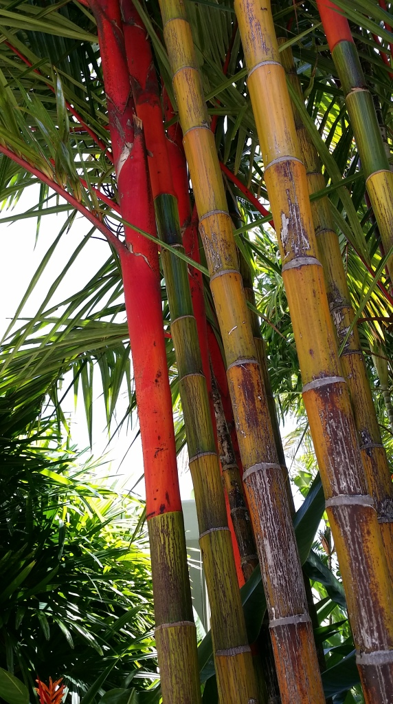 Beautiful colored palm trees