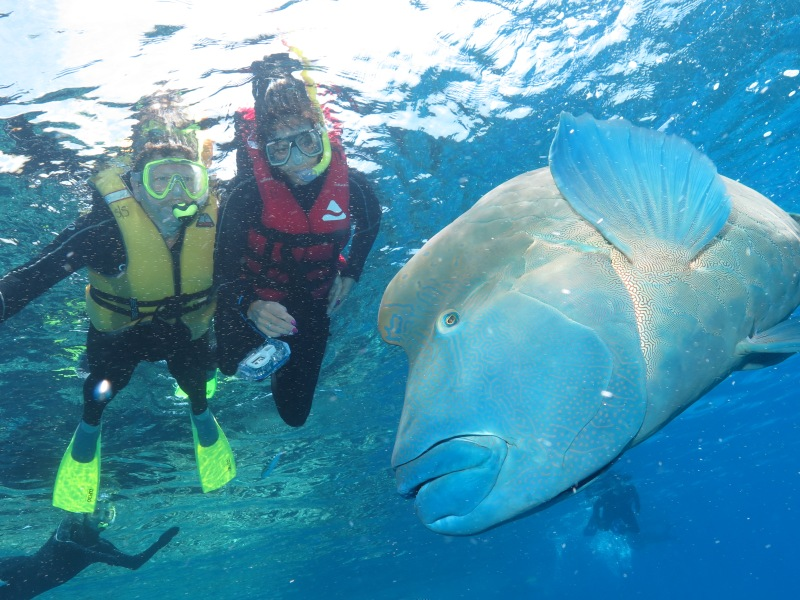 Wow what an amazing fish..i got to pat him and pure muscle! I have never been that close before!