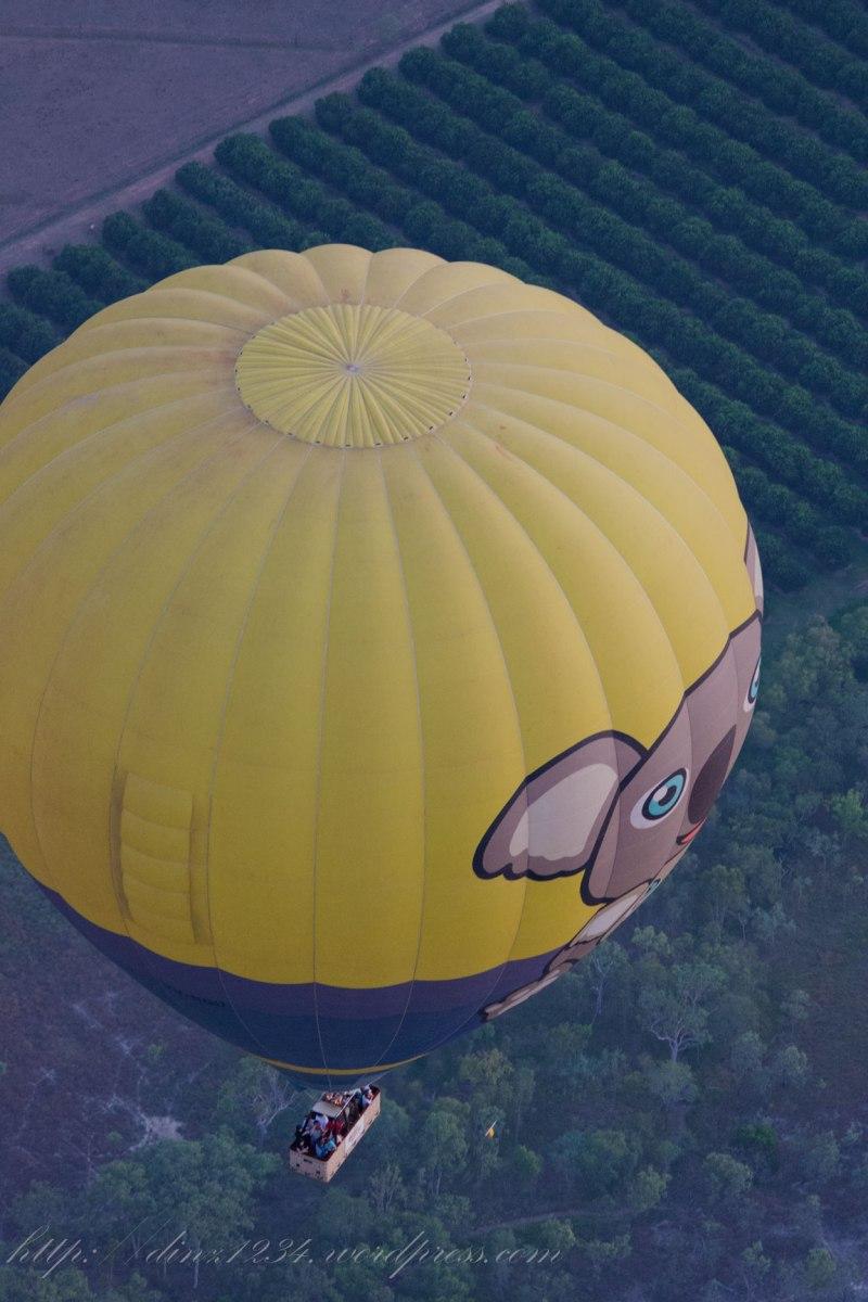 Koala_close_balloonjpg