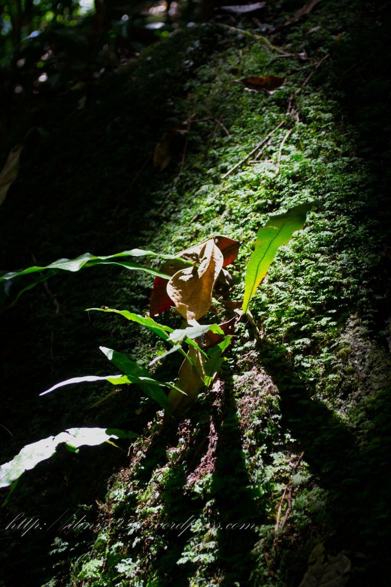 I loved how the light fell on some little patches in the rainforest..highlighting them for just a moment