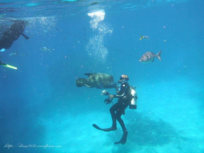 The Photgrapher having a moment with the Maori Wrasse..he was a very inquisitive fish!