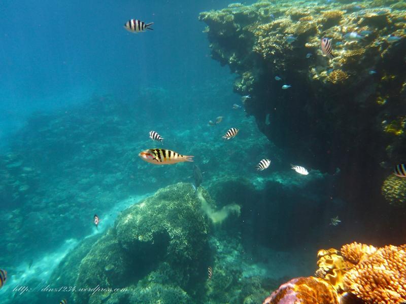Such pretty coloured fish