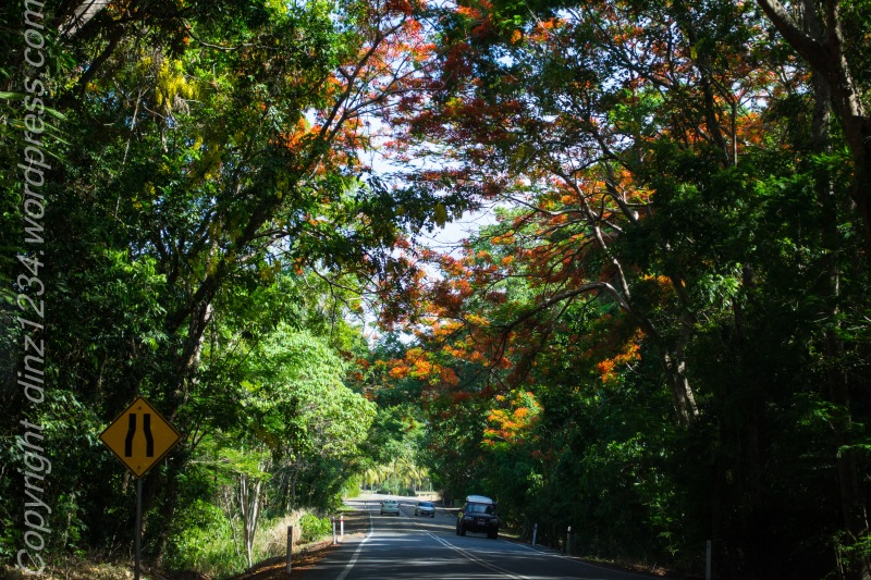 We hit the road after a dip..in search of food..the Flame trees line the roads