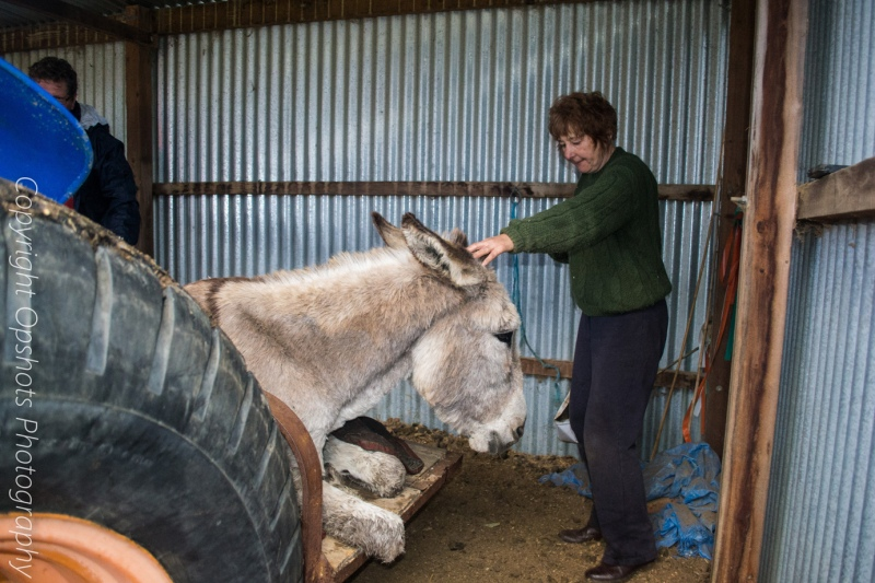 Alison keeps Pedro calm as we get ready to get him off the tractor