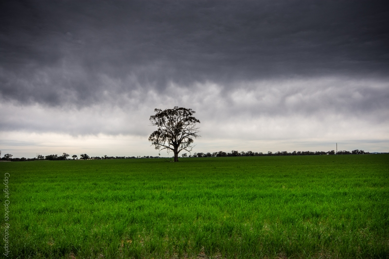 The lone tree and the looming sky