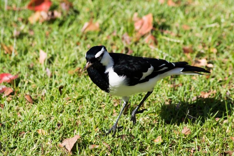 DSC_4245_birds
