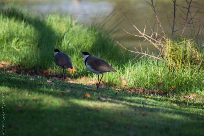 DSC_4266_birds