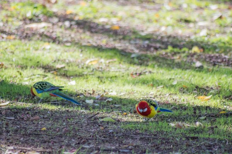 DSC_4271-birds