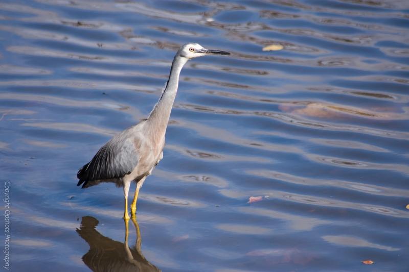 DSC_4310_birds