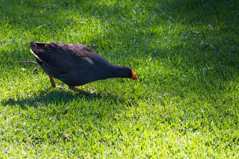 DSC_4331_birds