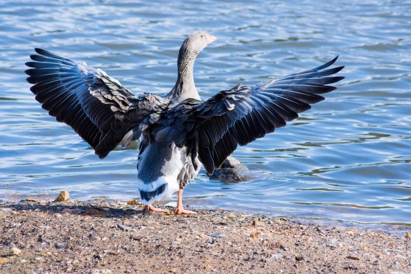 DSC_4344_birds