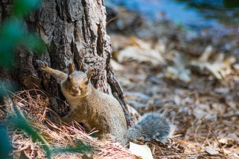 DSC_4773-2_Squirrel_wm