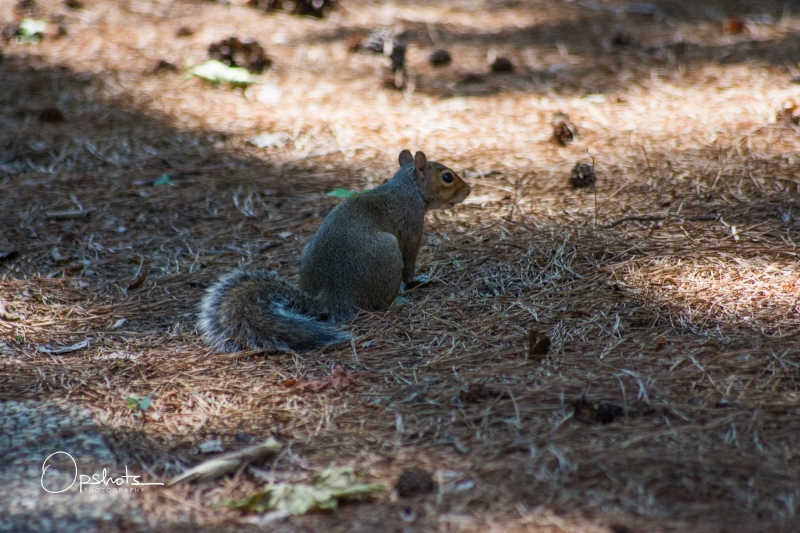 DSC_4782_Squirrel_wm